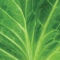 Fall Harvest Salad - Plate it Up! Kentucky Proud
