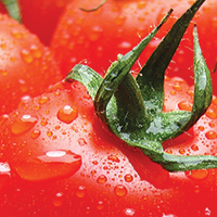 One-pot Pasta with Fresh Tomato Sauce