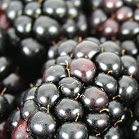 Blackberry Lemon Upside Down Cake - Plate it Up! Kentucky Proud