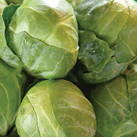 Brussels Sprouts with Ham - Plate it Up! Kentucky Proud