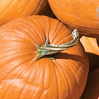 Fall Spiced Pumpkin Bread
