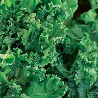 Kale and Cauliflower Salad