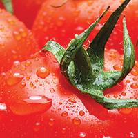 Tomato Corn Pesto Pizza - Plate it Up! Kentucky Proud
