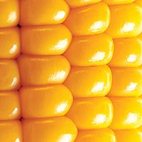 Zippy Corn Chowder - Plate it Up! Kentucky Proud